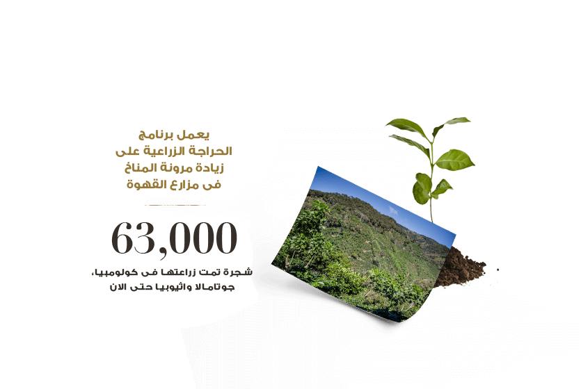 Our agroforestry program strengthens coffee farms' climate resilience. 63,000 trees planted in Colombia, Guatemala and Ethiopia to date